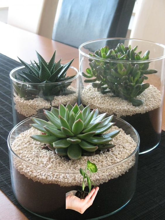 28 Cute Indoor Succulent Plant Decor Ideas to Beautify Your Home